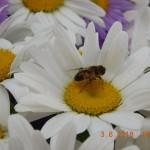 В Георгиевском приходе состоялась благотворительная акция «Белый цветок»